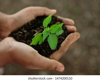 Young hands holding growing plant in a soil