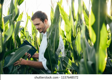 Young handsome agronomist holds tablet touch pad computer in the corn field and examining crops before harvesting. Agribusiness concept. agricultural engineer standing in a corn field with a tablet.