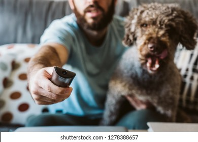 Young and handsome boy sitting on the gray sofa in his house. Watching television with his sweet spanish water dog. Changing channels with the remote control. Lifesytle.
