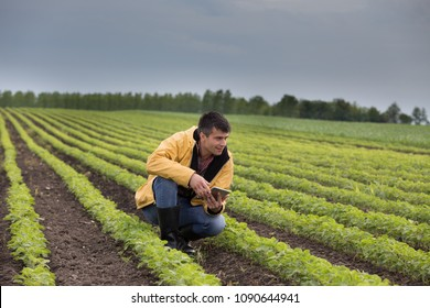 Young handsome farmer with tablet squatting in soybean field in spring. Agribusiness innovation concept