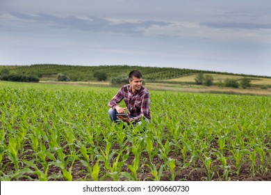 Young handsome farmer with tablet squatting in corn field in spring. Agribusiness and innovation concept