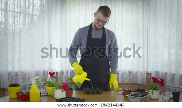 Young handsome gardener planting vegetables herbs flowers, watering soil for seedlings in palettes, seed starting tray, food growing, eco products without GMO, nursery garden, horticulture concept