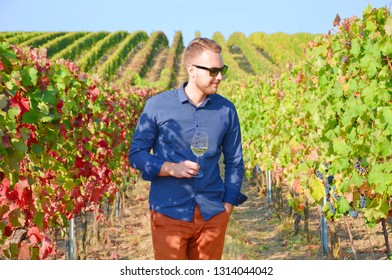 Young handsome winemaker posing in beautiful vineyards with a glass of white wine. The vine leaves have amazing autumn tones. The young man is wearing a dark blue shirt and modern black sunglases.