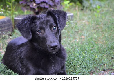 Young happy black dog on the lawn