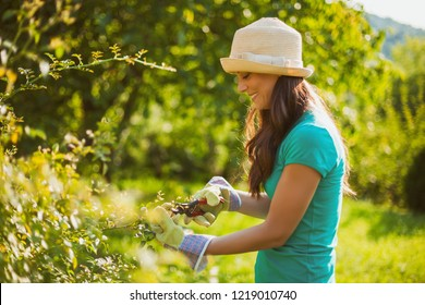 Young happy woman in her garden. She is pruning flowers.