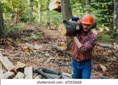 The young, hard-working logger carries a log on his shoulder