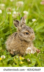 Young hare in the grass, Easter hare in the grass, small hare sitting in the grass, lovely hare