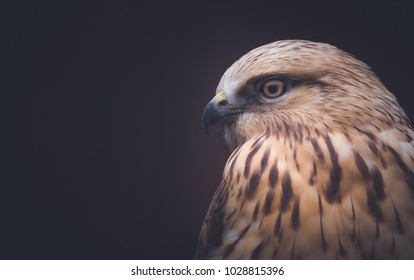 A young hawk is sitting waiting for prey