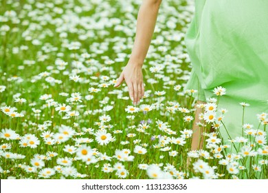Young, healthy, beautiful woman goes on a summer morning in a field with camomile flowers in a green dress, touches chamomile with her hands