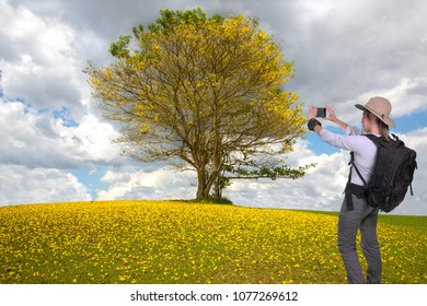 Young hiker lady taking a cellphone picture of a beautiful tree with yellow flowers