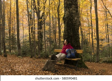 Young hiker woman is resting on a bench under an old tree in the autumn forest enjoying the peace and tranquility of nature.