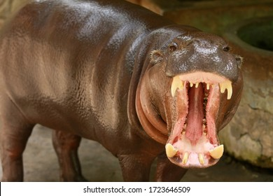 Young hippo with oily body skin showing his smile with open wide the mouth until the tooth shown