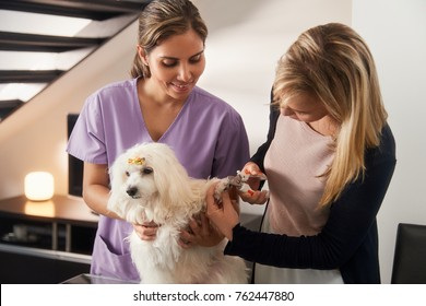 Young hispanic woman working as veterinary, vet teaching dog owner how to use nail clipper to clip pet nails, nail trimmer to trim pet toenails