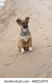 young homeless dog on the beach