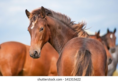 Young horse looking back