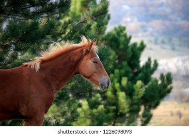 Young horse in nature