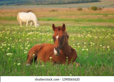 Young horse resting on the green meadow. Nature composition.