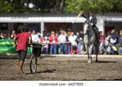 Young Horse riding Bullfighter girl, practicing and demonstrating skills in the arena, Portugal