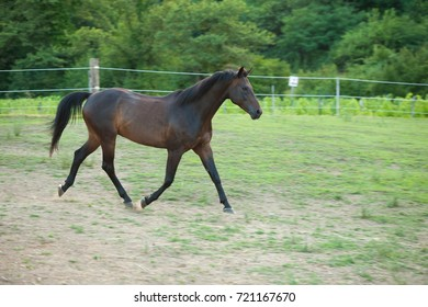Young horse running around on the field