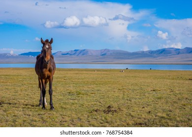 Young horse standing in scenic landscape around Song Kul lake, Kyrgyzstan