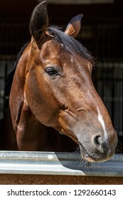 young horse staring over a stable door
