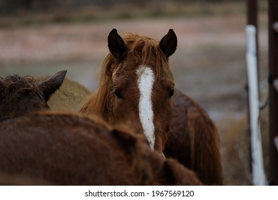 Young horses in dreary rainy weather on farm, blurred foreground.