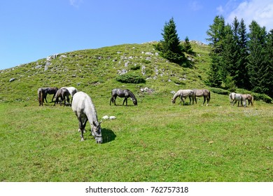 Young horses on the meadow in summer time