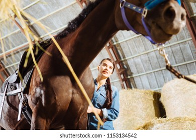 Young horsewoman. Young horsewoman with long dark hair feeling cheerful while feeding her racing horse