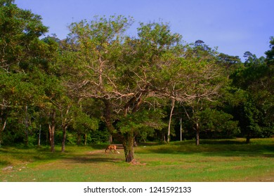 Young Hourse Stand Near Tree