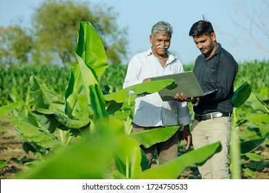 young indian farmer with agronomist at banana field