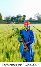 Young indian farmer holding wheat crop in hand at agriculture field