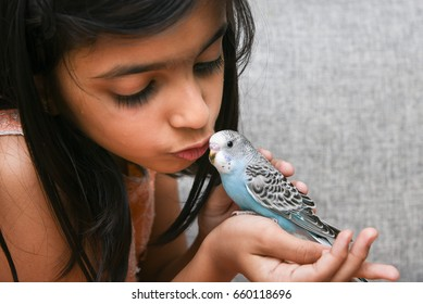 Young Indian girl  / kid playing with blue pet love bird Budgie on her hand, Kerala India.