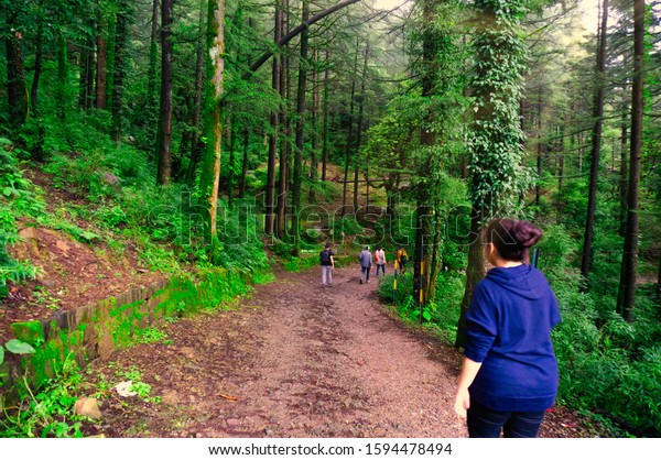 Young indian woman walking trekking on a path on the mountain ranges of mcleodganj, dharamshala india. Walking in a blue track suit with tall coniferous trees all around and a dirt path in front to