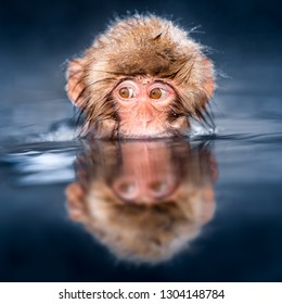 Young Japanese macaque is taking a bath in a hot spring, Jigokudani monkey park, Nagano Prefecture, Japan