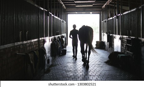 Young jockey walking with a horse out of a stable. Man leading equine out of barn. Male silhouette with stallion. Rear back view. Love for animal. Beautiful background.