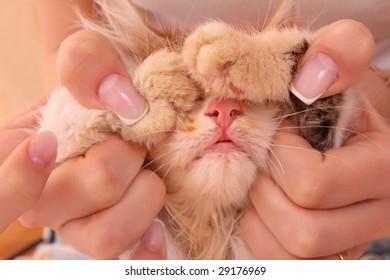 Young kitten in hands