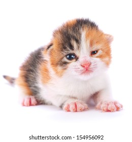 Young kitten isolated on white background