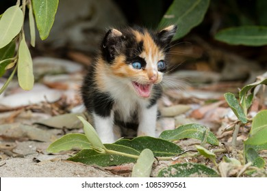 Young kitten left behind by the mother in the mangroves