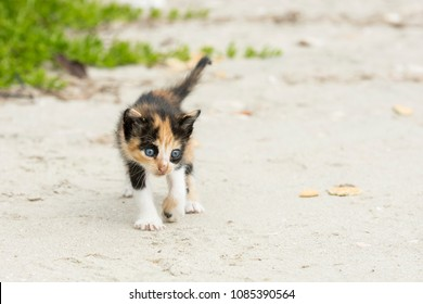 Young kitten left behind by the mother on the beach