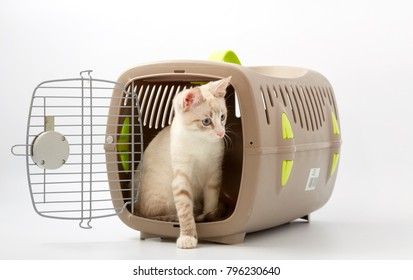 young kitten on a white background with an animal carrier