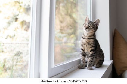 Young Kitten Sitting on Window Sill