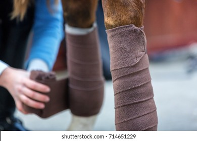 Young lady bandaging horse's leg.