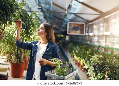 Young lady chosing plants for her backyard in a garden supply store, shopping for flowers. Summer is the best time to care for home.
