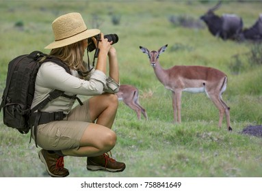 Young lady in Safari Attire Taking Photographs of African Wildlife