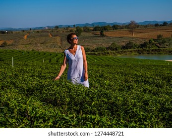 A young lady walks in the Thai tea fields. She caresses the leaves carefully with her hands. Sunglasses on her face.