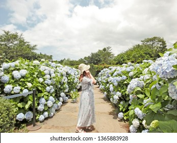Young lady wearing dress with hat standing in a beautiful garden with blooming hydrangeas under a perfect blue sky in Camellia hill in  Jeju island during summer