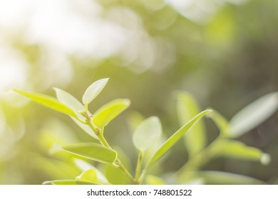 young leaves with green nature early in the morning.