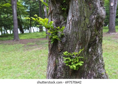 Young leaves on a tree bark