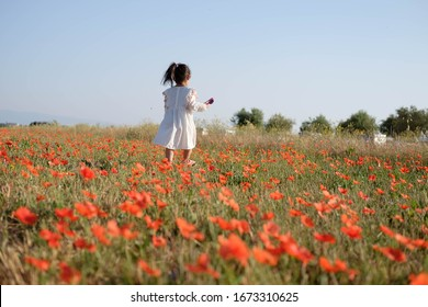 Young little girl in white dress walking in blooming poppy field in Valensole, Provence, France