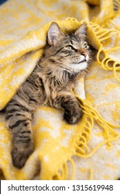Young Long Haired Tabby Cat Relaxing on Yellow Blanket